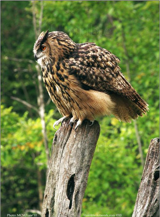 Owl0609sml (1)