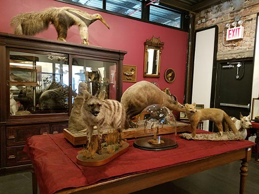 taxidermy panorama